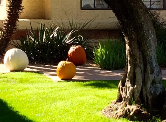 Few things say fall like pumpkins in the yard.
